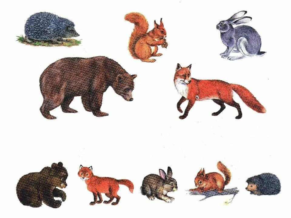 картинки для макета дикие животные бывает