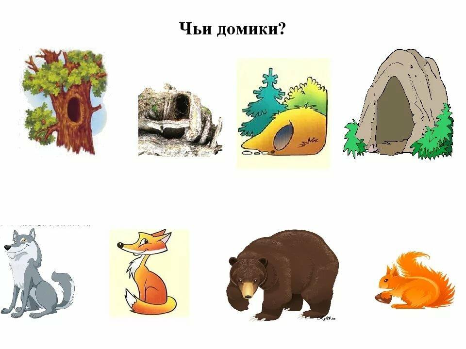 губы жилища животных леса картинки шубу