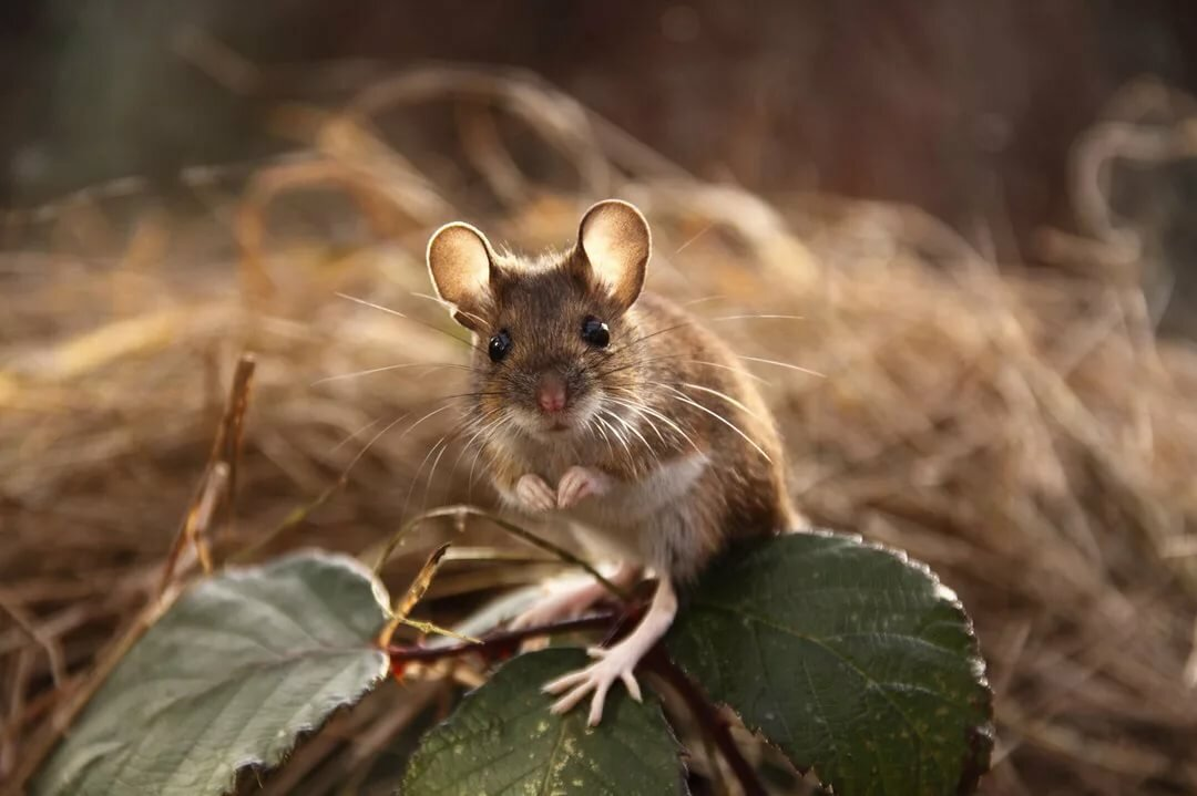 открытка мышка фото даже