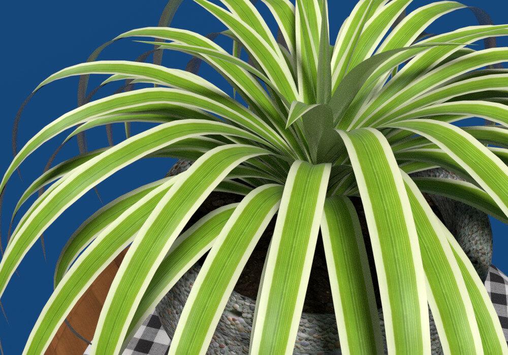 Комнатные растения картинки и названия хлорофитум
