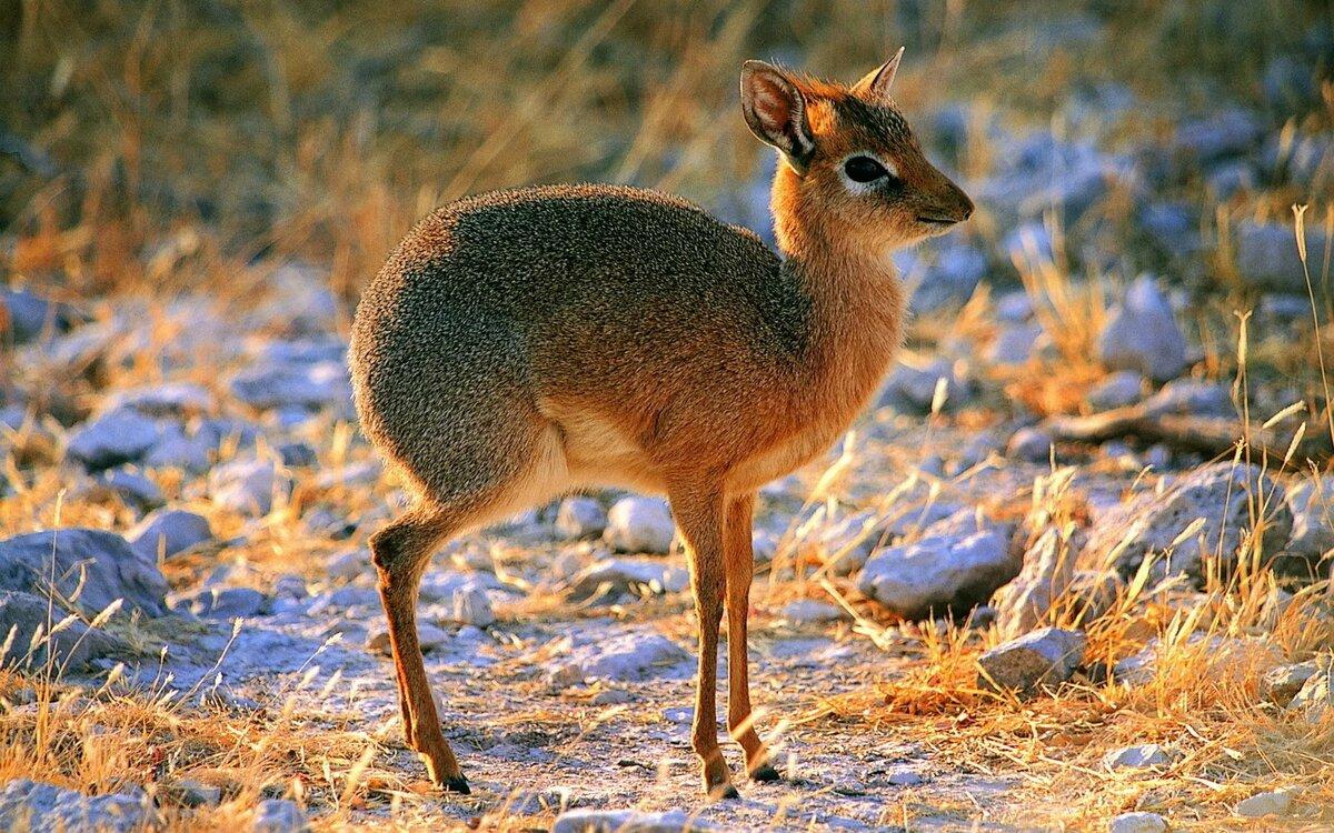 Степные животные фото и названия