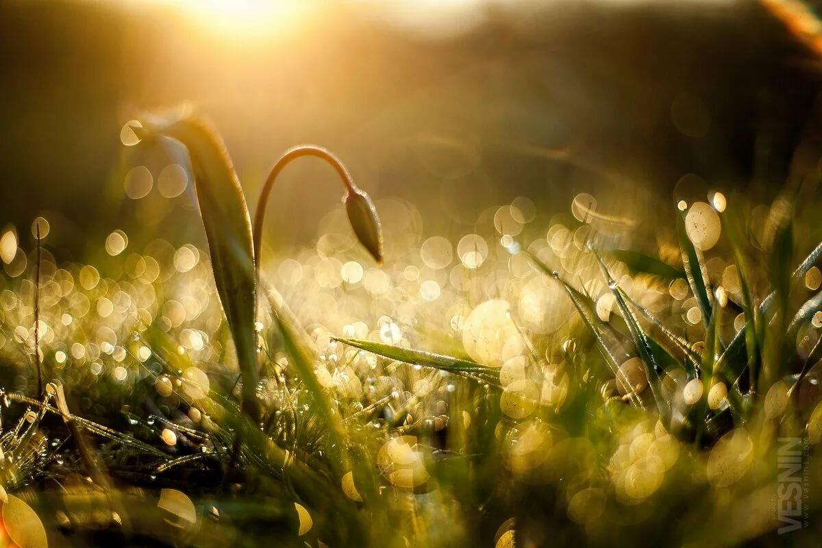 картинки весна утро красота вам