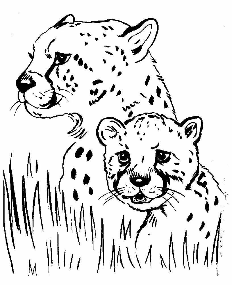 Разукрашивать картинки о животных