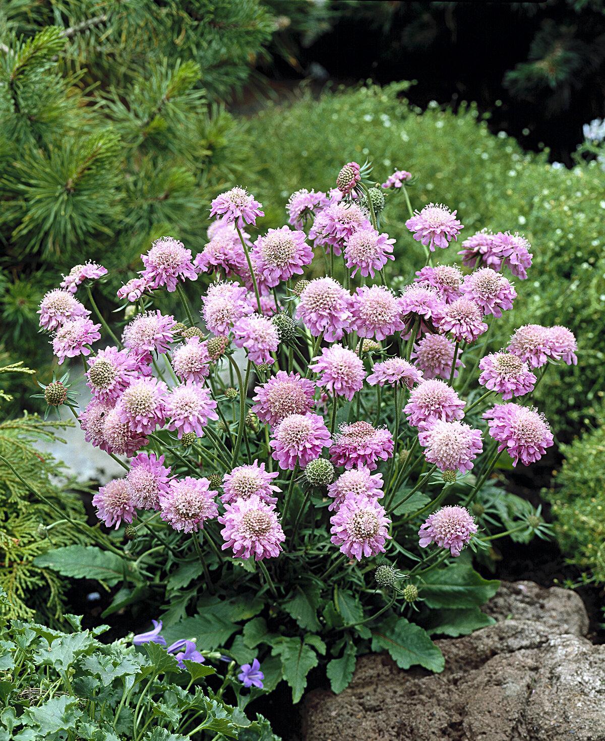 Фото и название многолетних цветов в саду