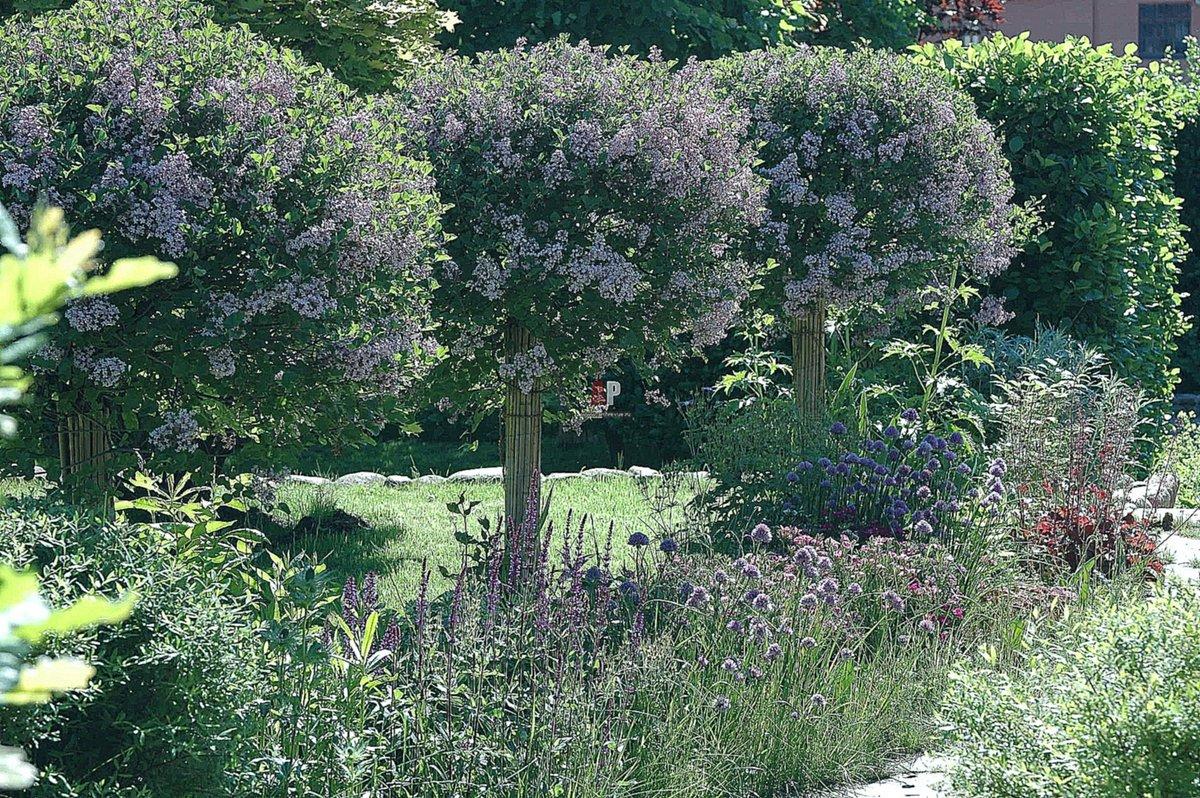 один композиции из сирени в саду фото всего