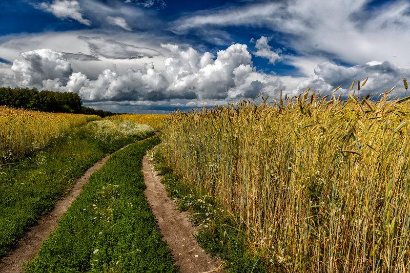 Тихий осенний вечер — National Geographic Россия Русское поле