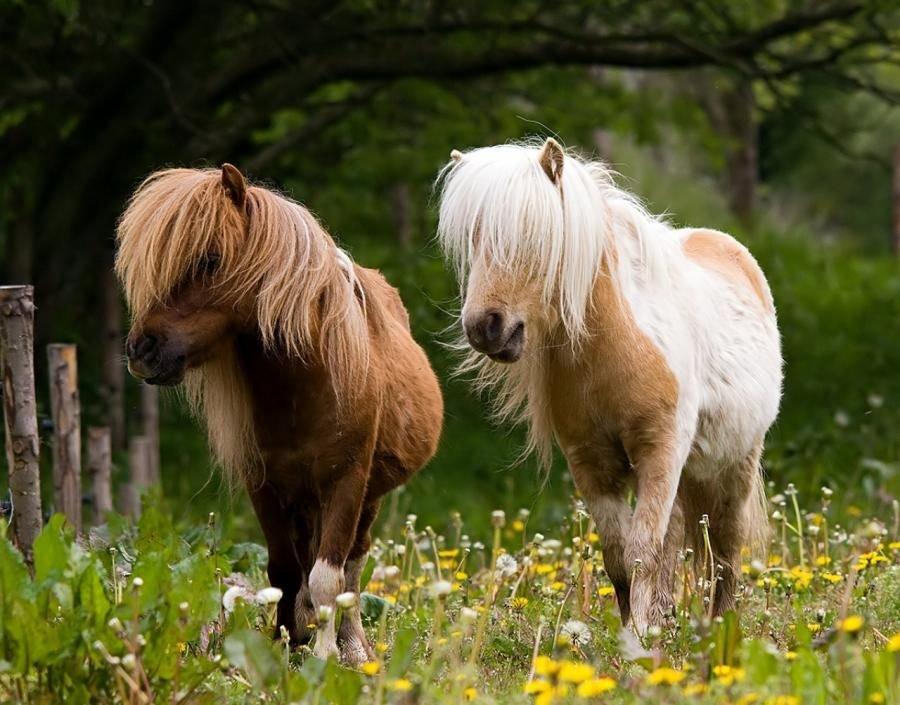 Картинки лошадок пони