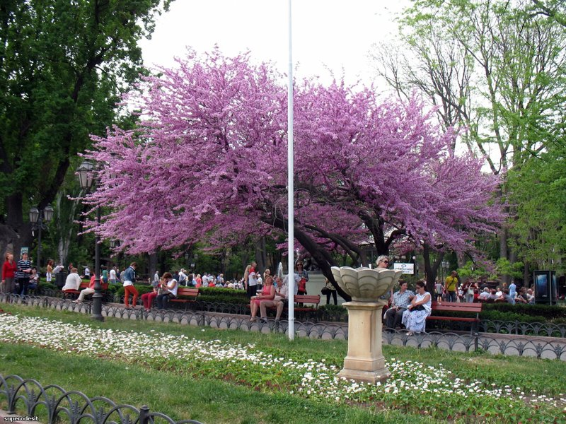 Городской сад, первый парк Одессы.