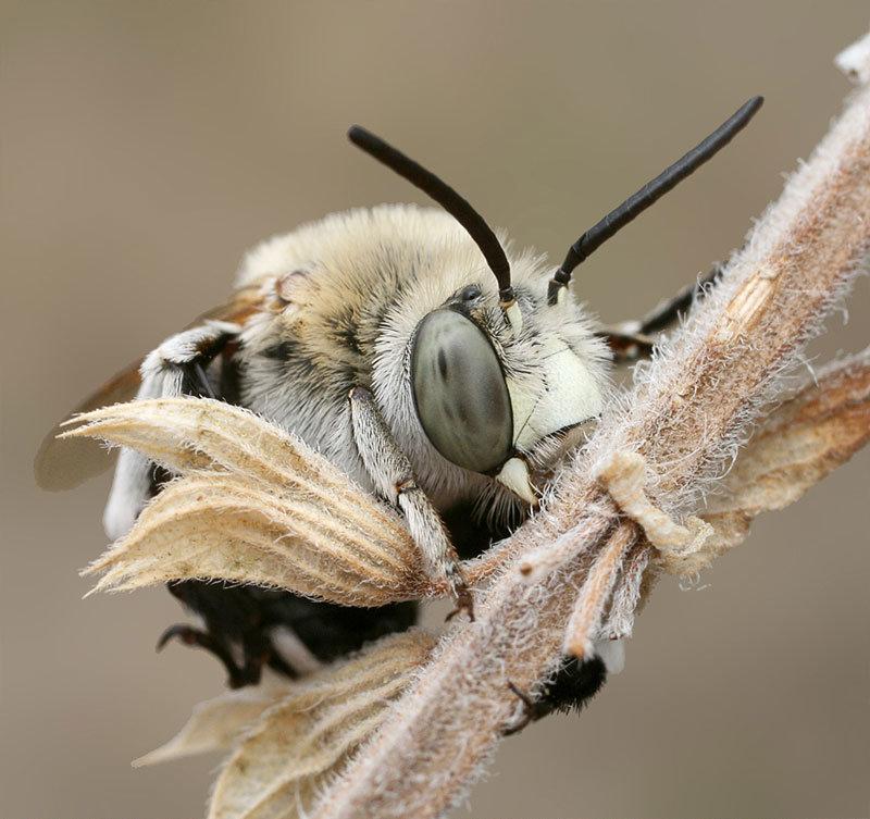 Само название продукта пчеловодства пришло с Израиля. На русском оно означает «магические чары».