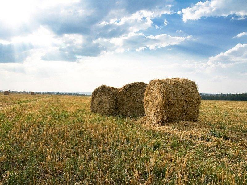Русское поле и снопы сена - Картинки на рабочий стол - Обои - фото ... Русское поле и снопы сена