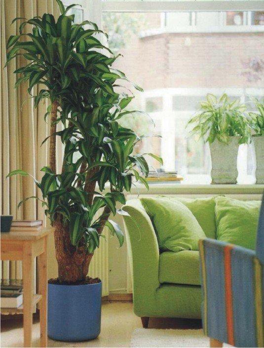 Для гостиной более всего подойдут несколько зеленых островков, образованных группой комнатных растений,