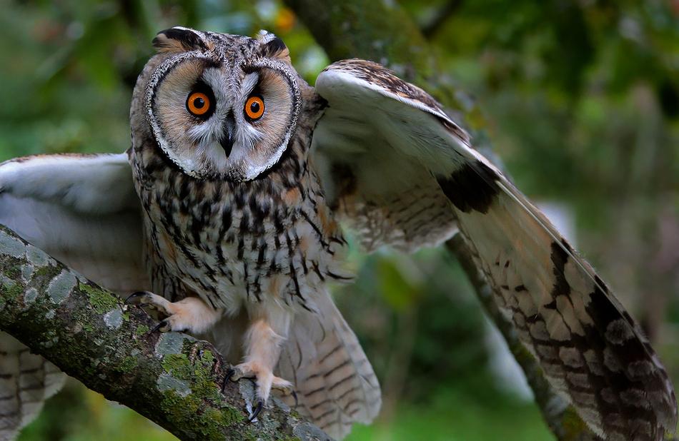 Кто лучше слышит? 10 животных с невероятным слухом