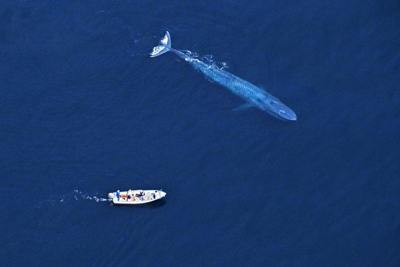 Картинки по запросу кит и лодка