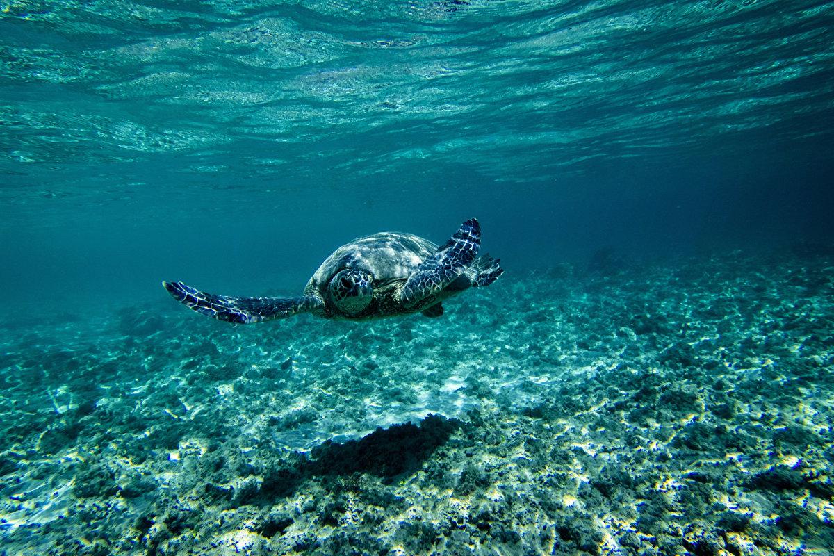 картинки под водой высокого качества проще обслуживать