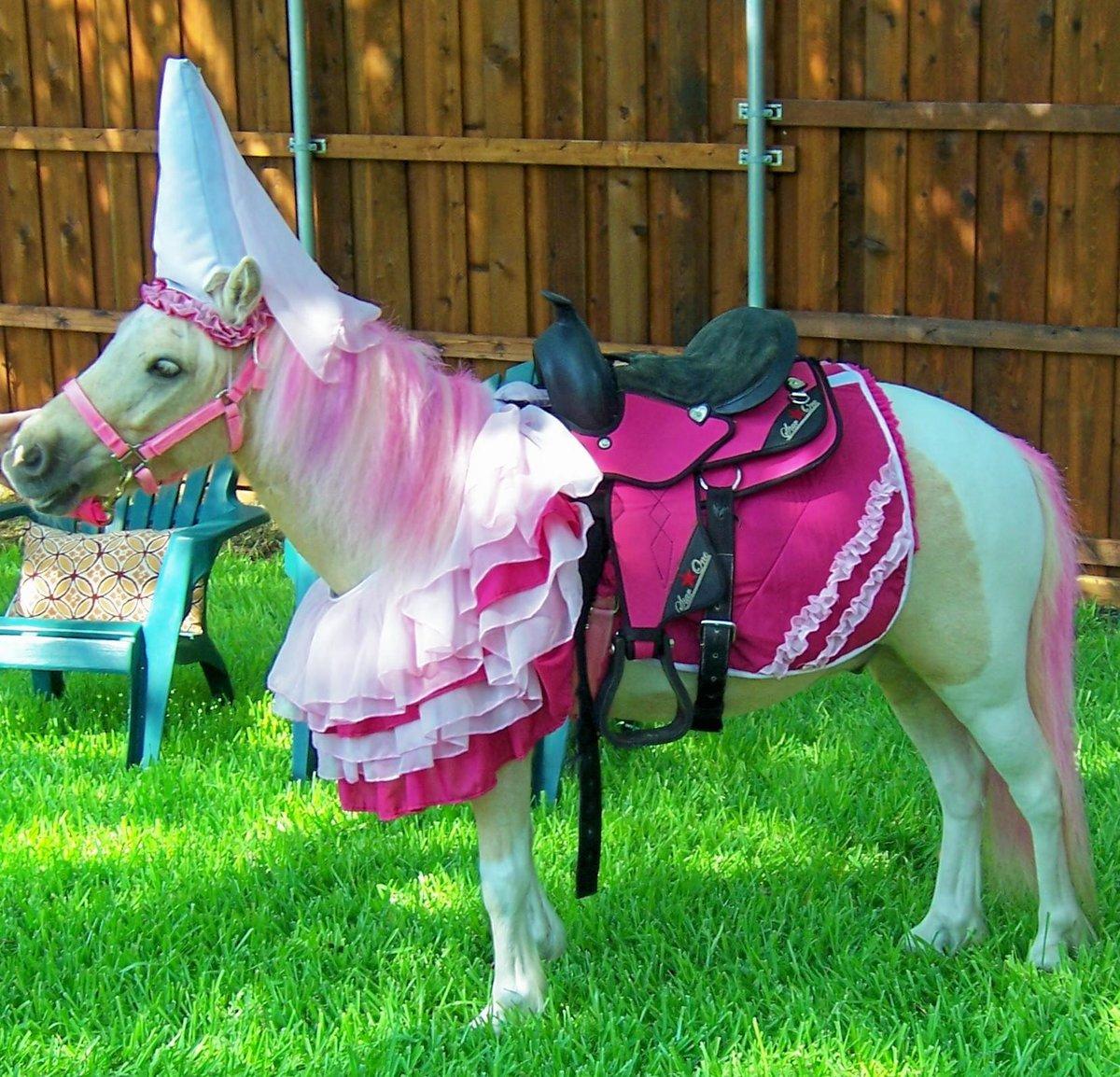 наряды для лошадей в картинках вариант является более