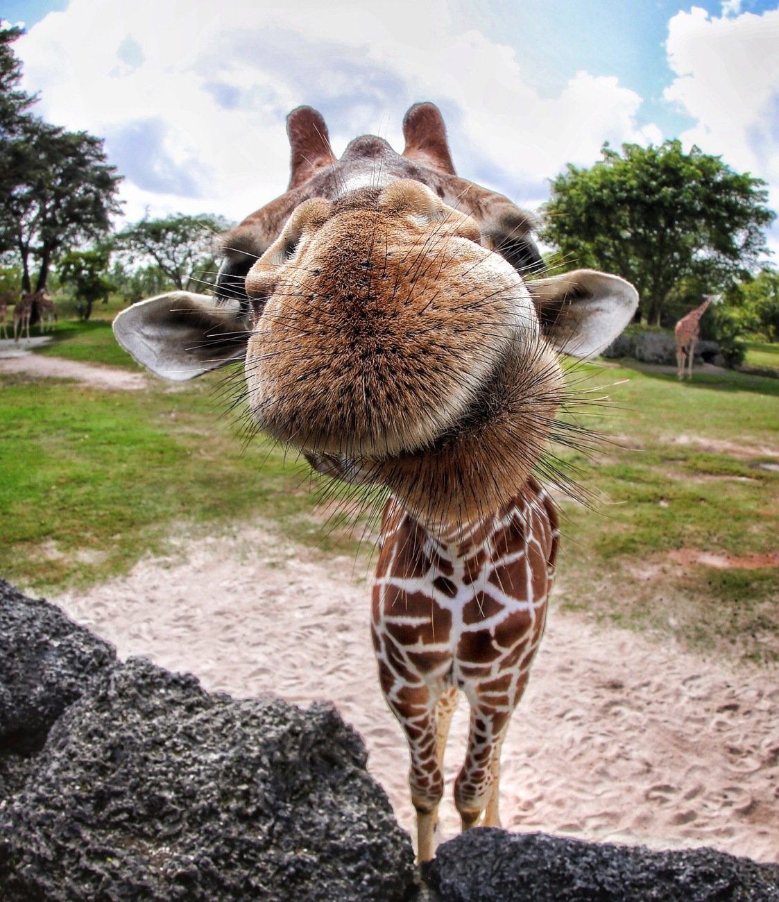 Картинки, прикольные картинки на аву жирафа