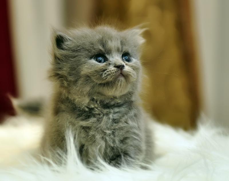 Смотреть фото пушистые котята