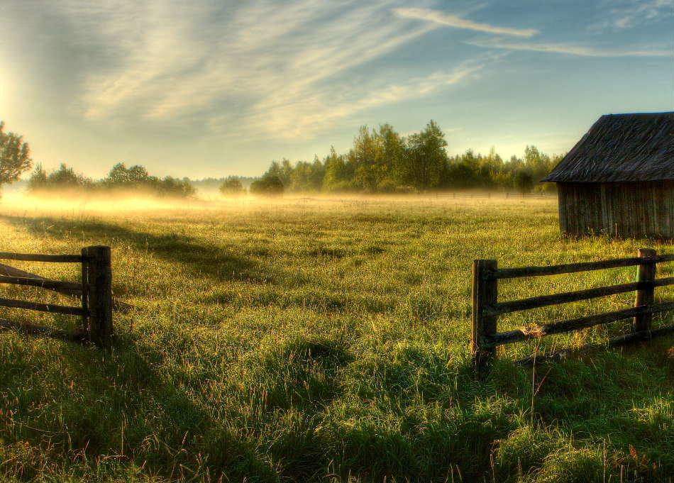 его картинка летнее утро в деревне только предположения