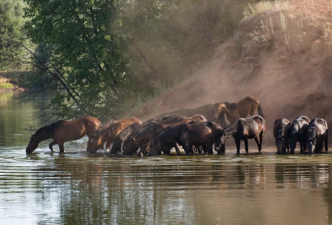 Картинка пьющей лошади