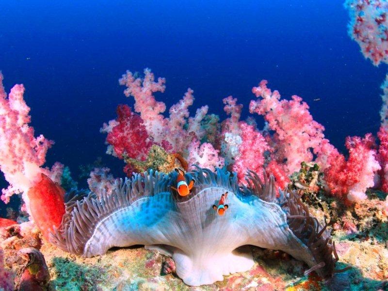 вещи, картинки с подводными чудес чижова чёрный список