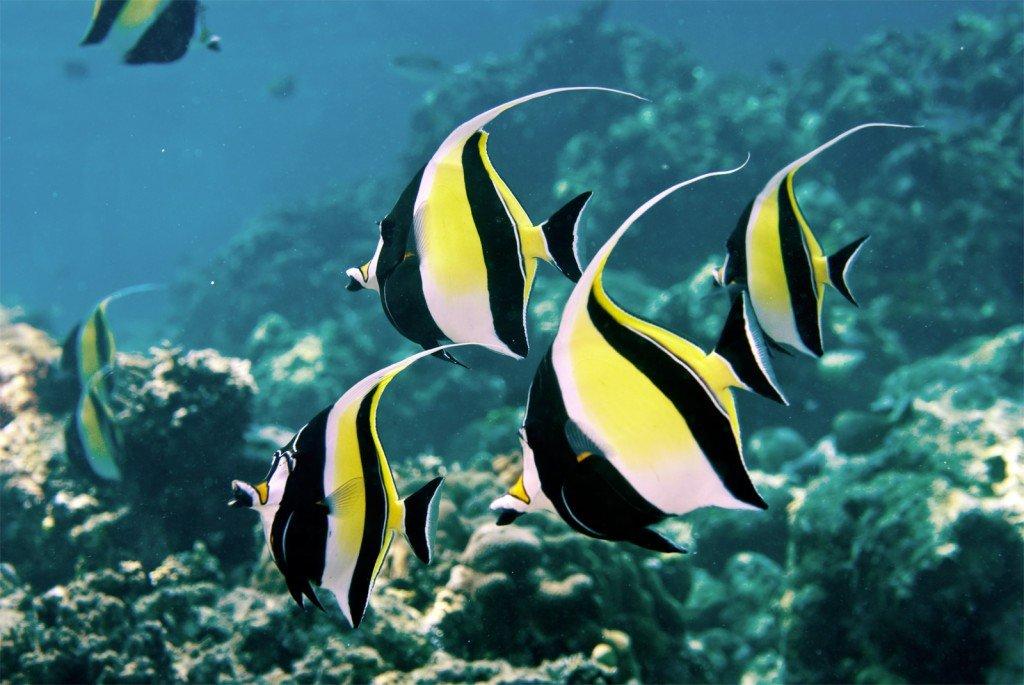 Рыбы картинки красивые