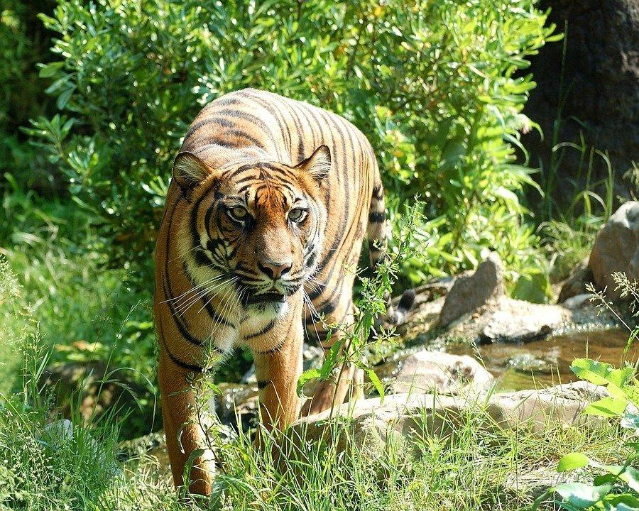 Национальный парк России «Зов тигра»