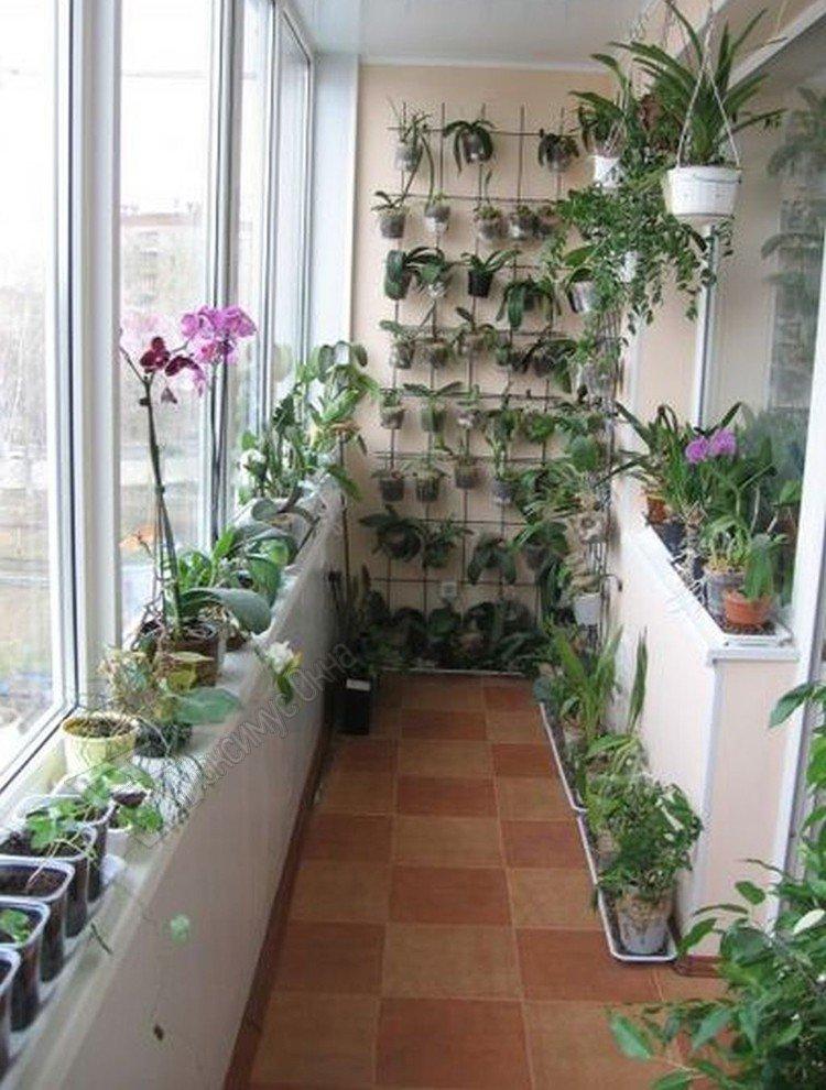 Зимний сад на балконе сможет устроить любая домохозяйка, при.