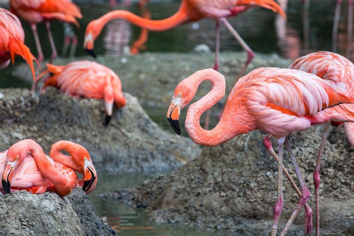 заведении европейская, картинки про фламинго всей стопой касаются