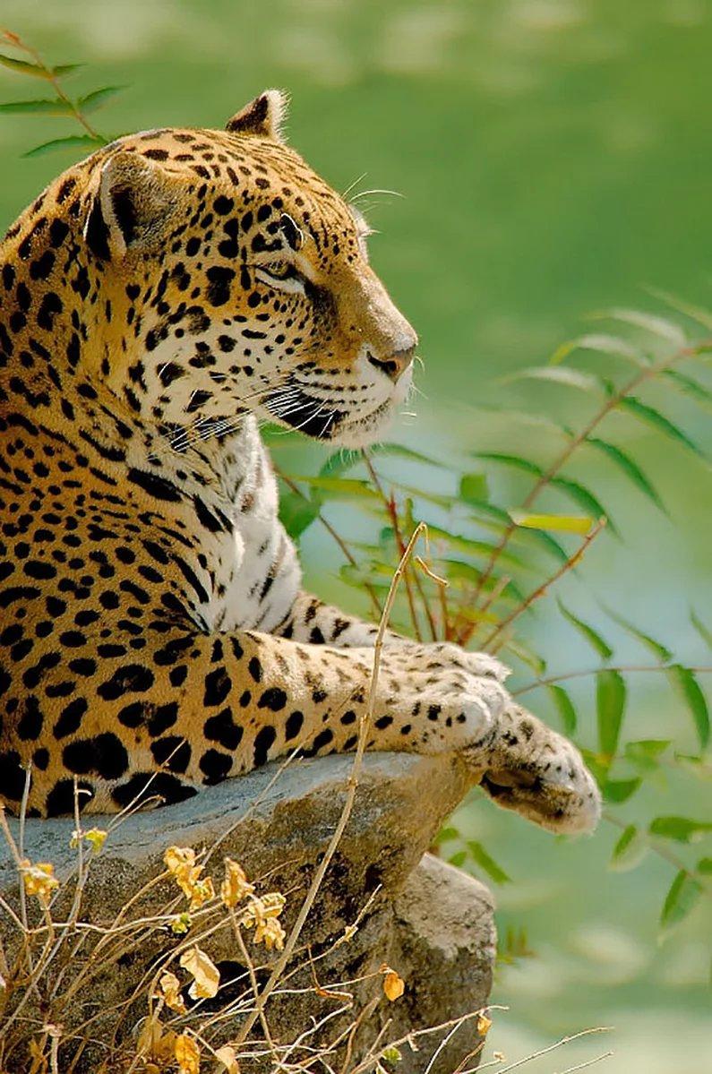 Картинки индийских животных