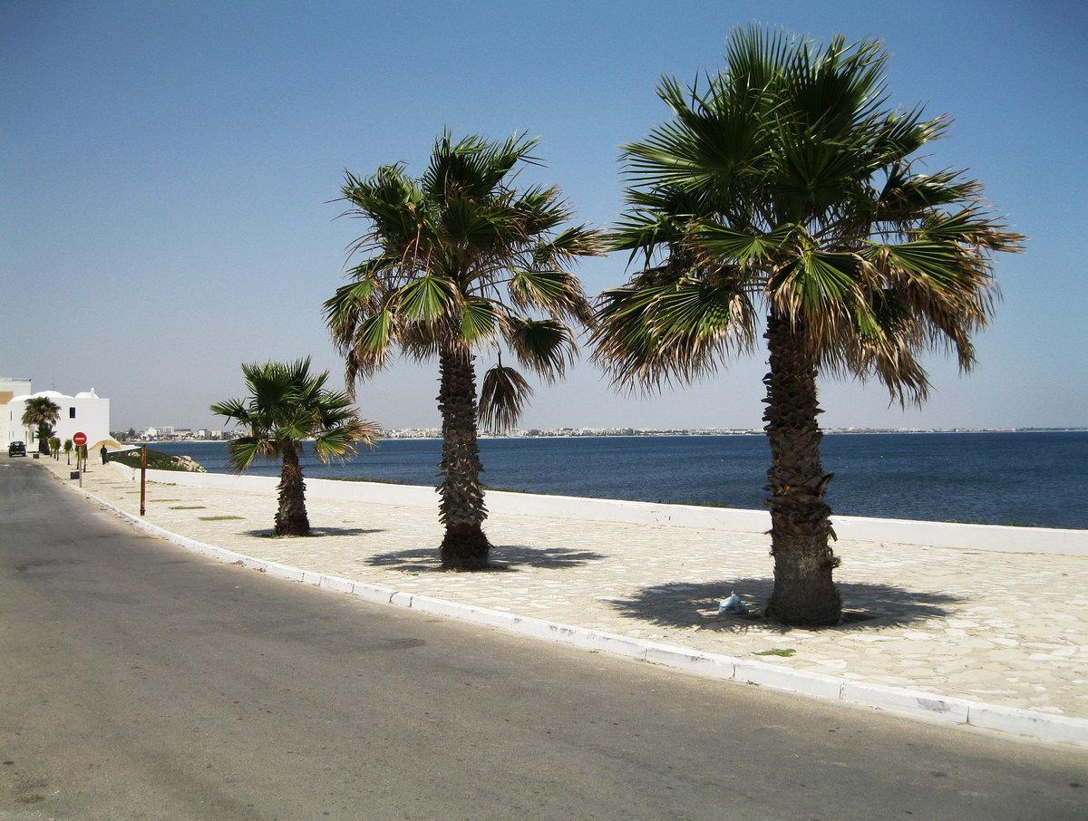 проект входят фото пляжа махдия тунис менее