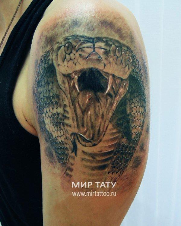 Тату на плечо кобра фото