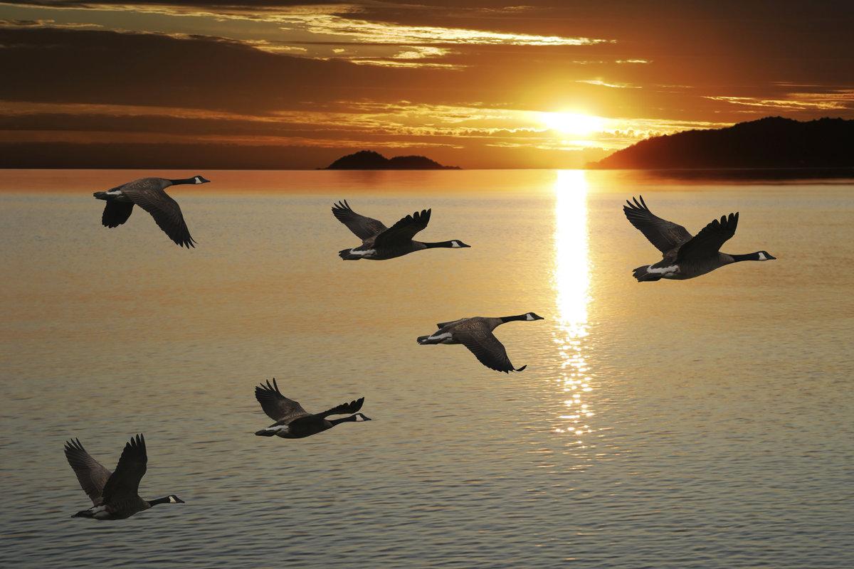 Картинка перелета птиц осенью