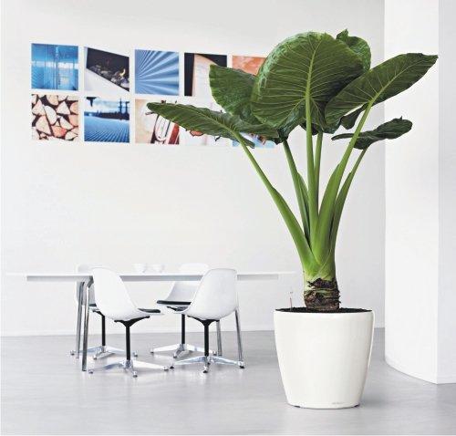 Наиболее интересным решением представляется украшение холла теневыносливыми растениями