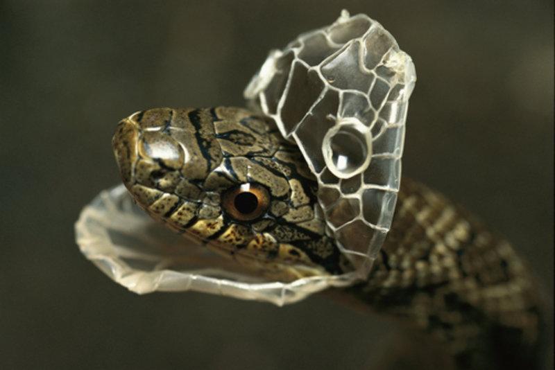 В азии и североамериканских культурах, змея является символом мудрости.