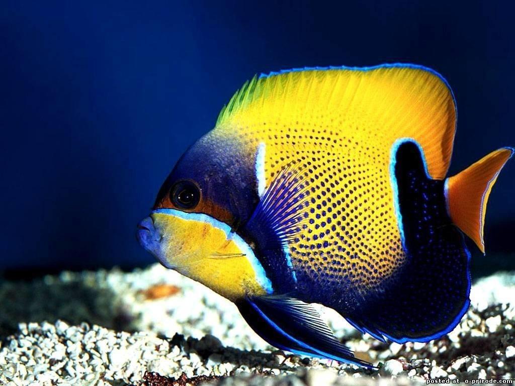 Фото и картинки ярких рыбок