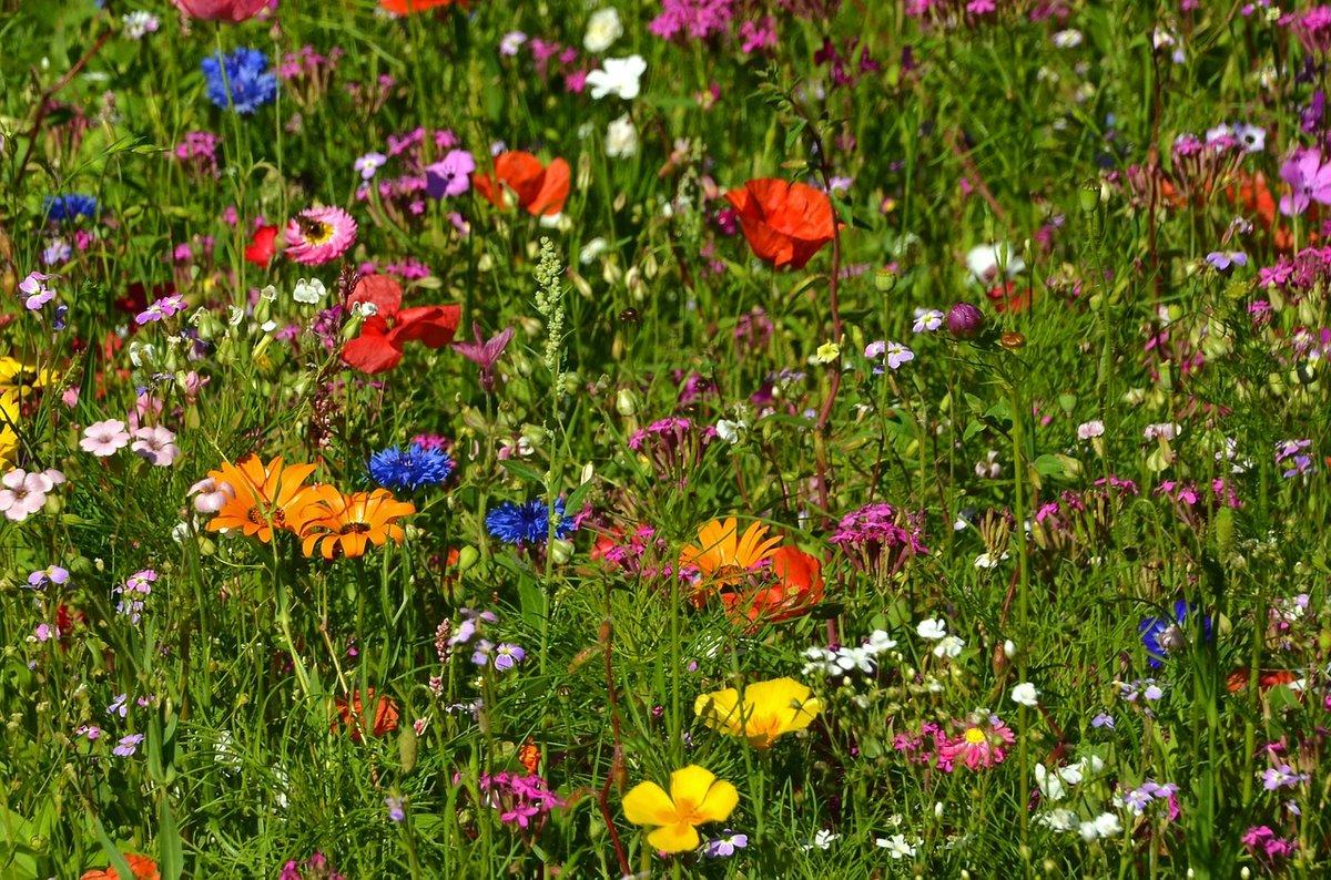 подробный цветочный газон в картинках снялась еще