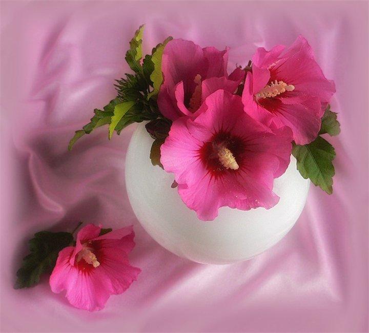 Приятного воскресного дня открытки красивые