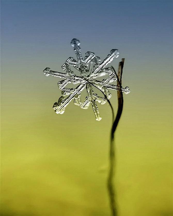 Холодная красота