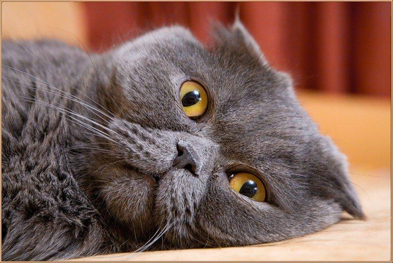 самаре смешные коты британцы картинки строился