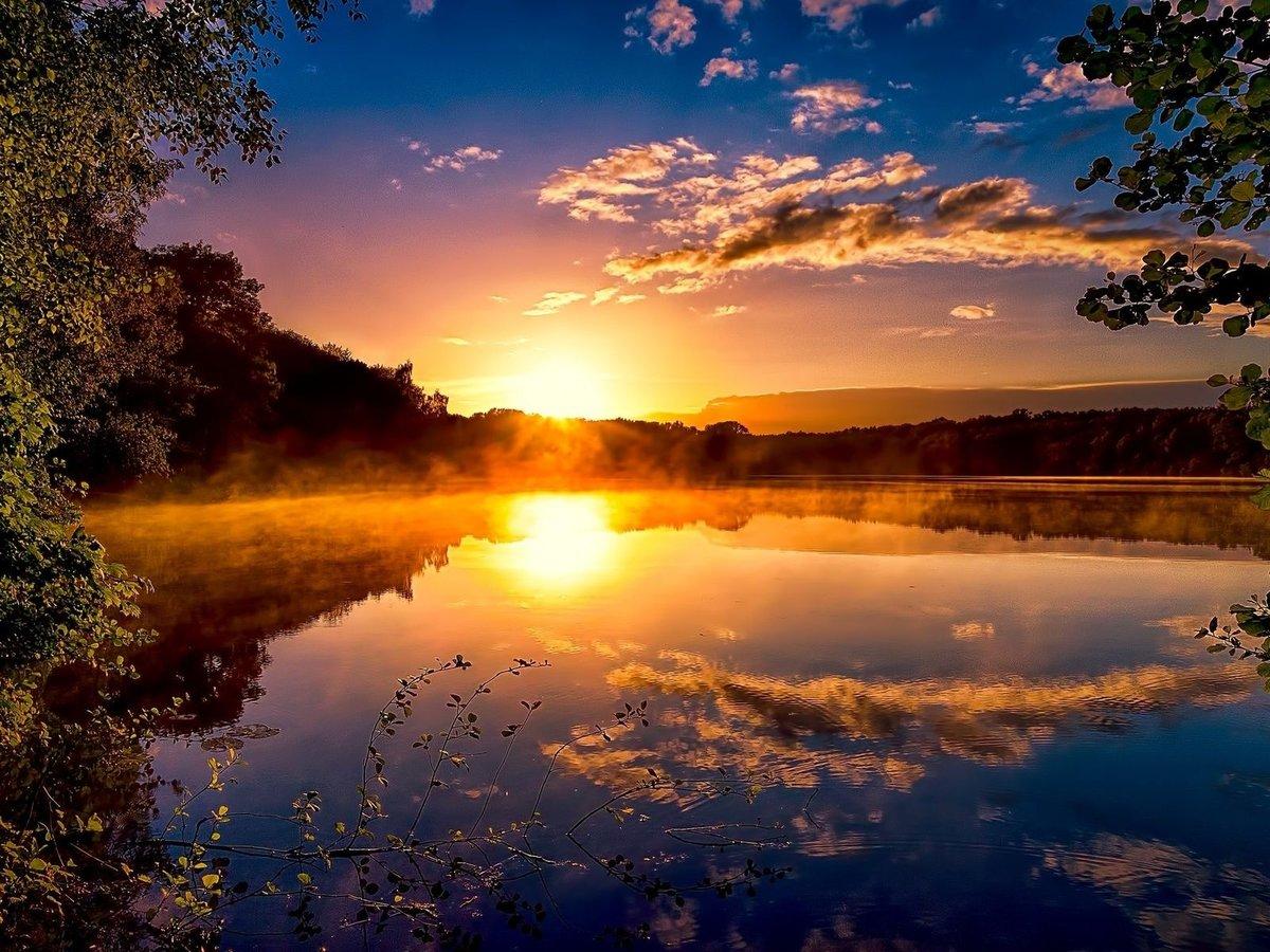 Картинки красивые утренние природа, йоркширский терьер щенки