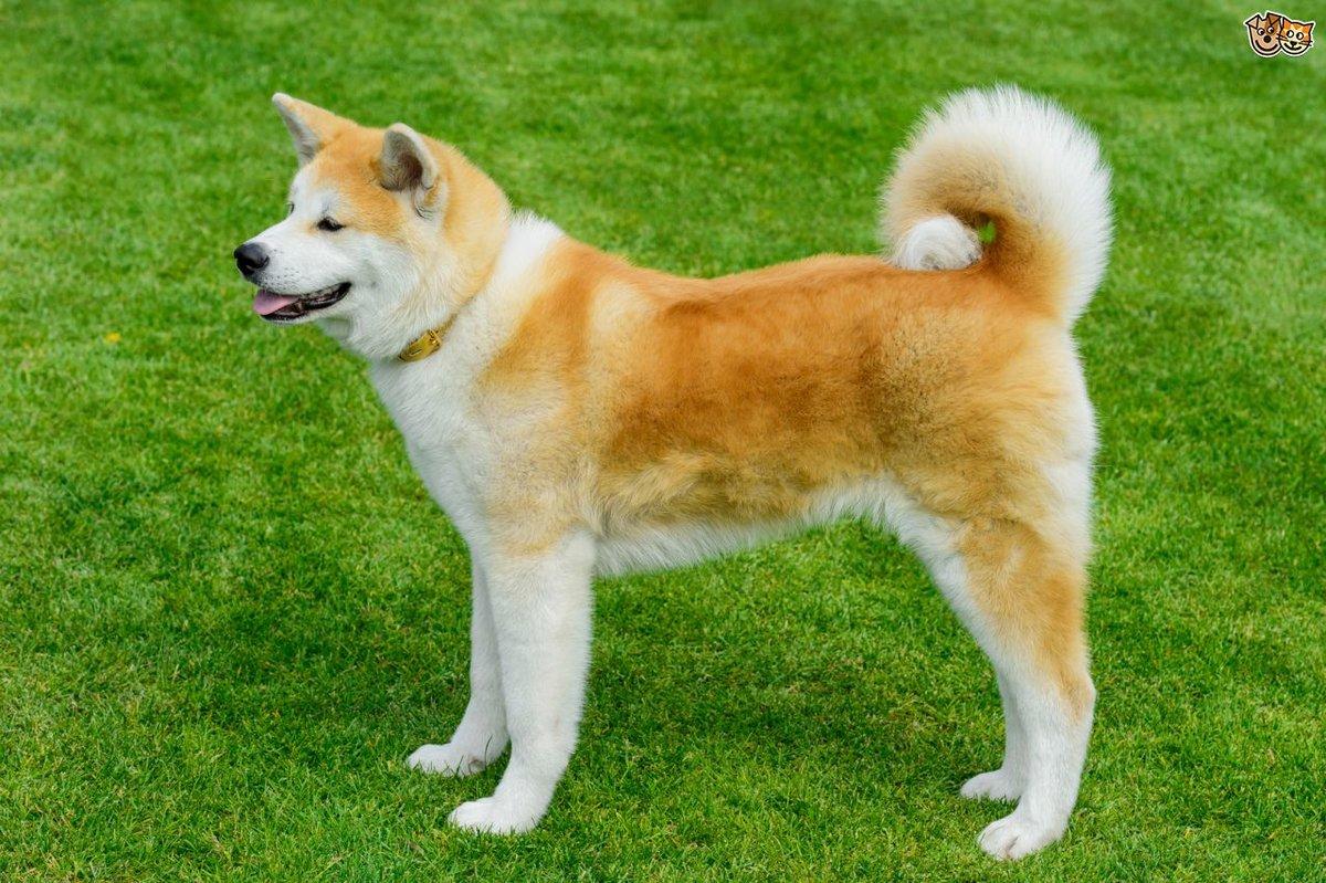 Известные породы собак картинки