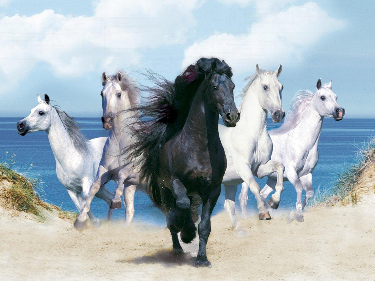 Лошадь. открытка, понедельник