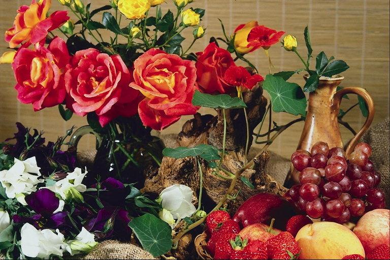 Цветы хризантемы комнатные фото с названиями