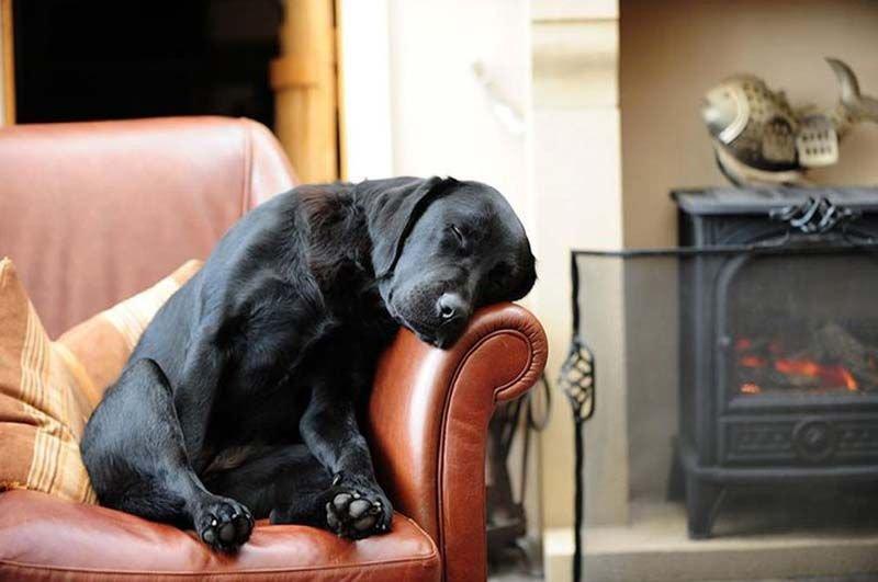 Собаками, прикольные картинки с лабрадорами