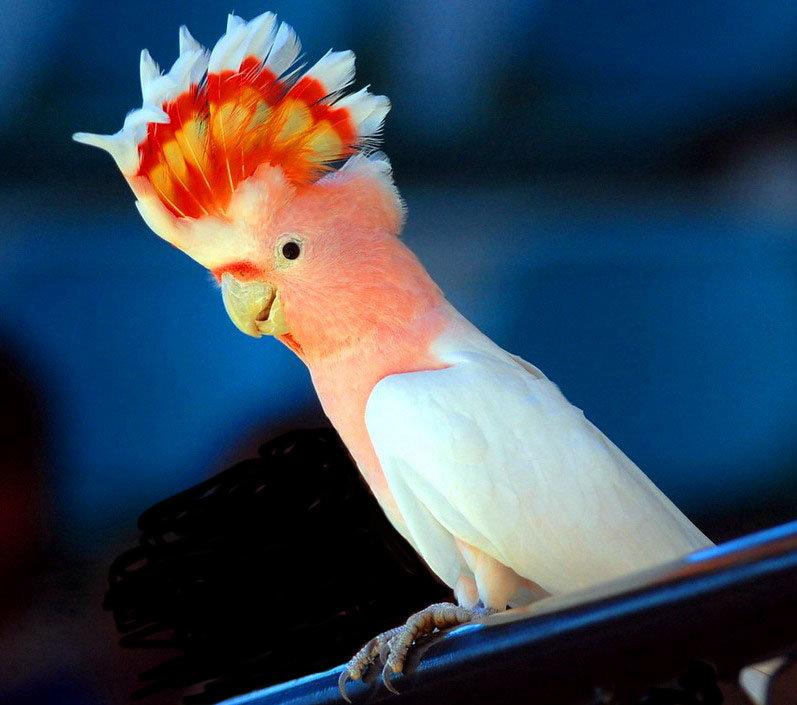 шла попугаи фото всех видов джем черной