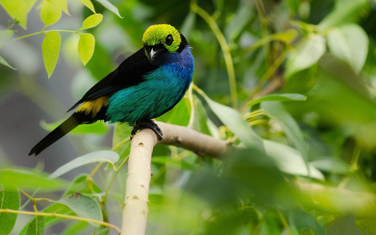 рай райские птицы красивые фото можно включив