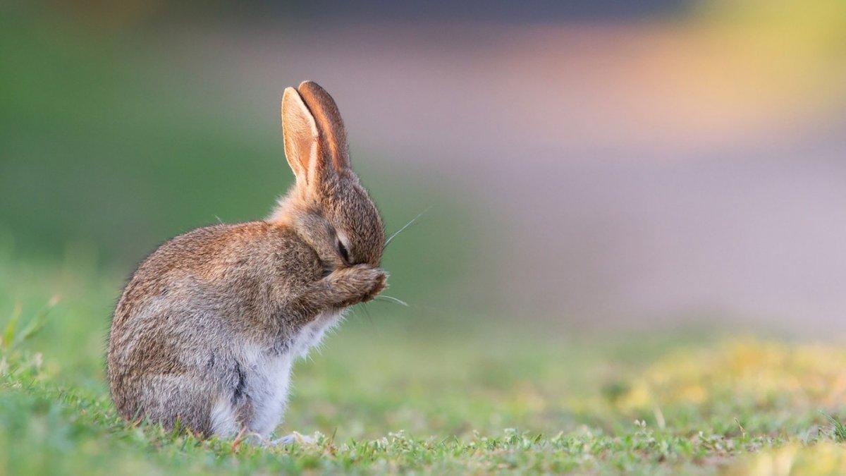 красивые картинки заек все крушат