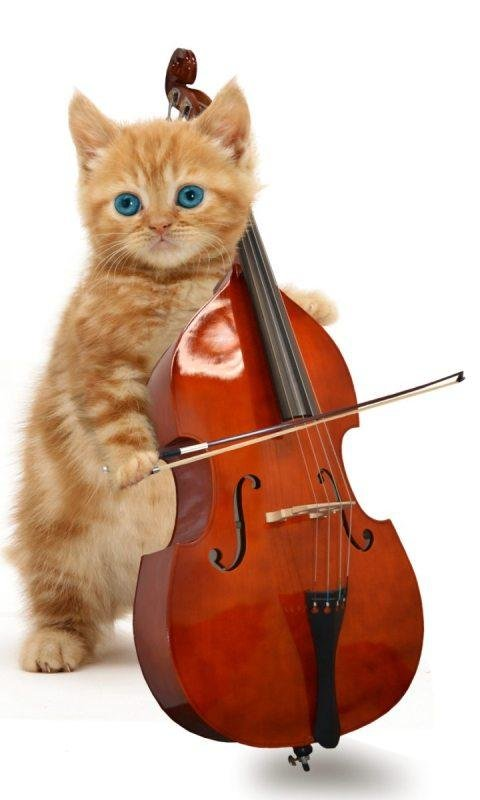 Музыкальные инструменты смешные картинка, успение пресвятой