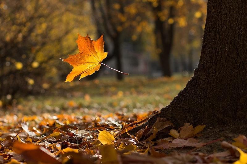 Осыпание листьев дерева