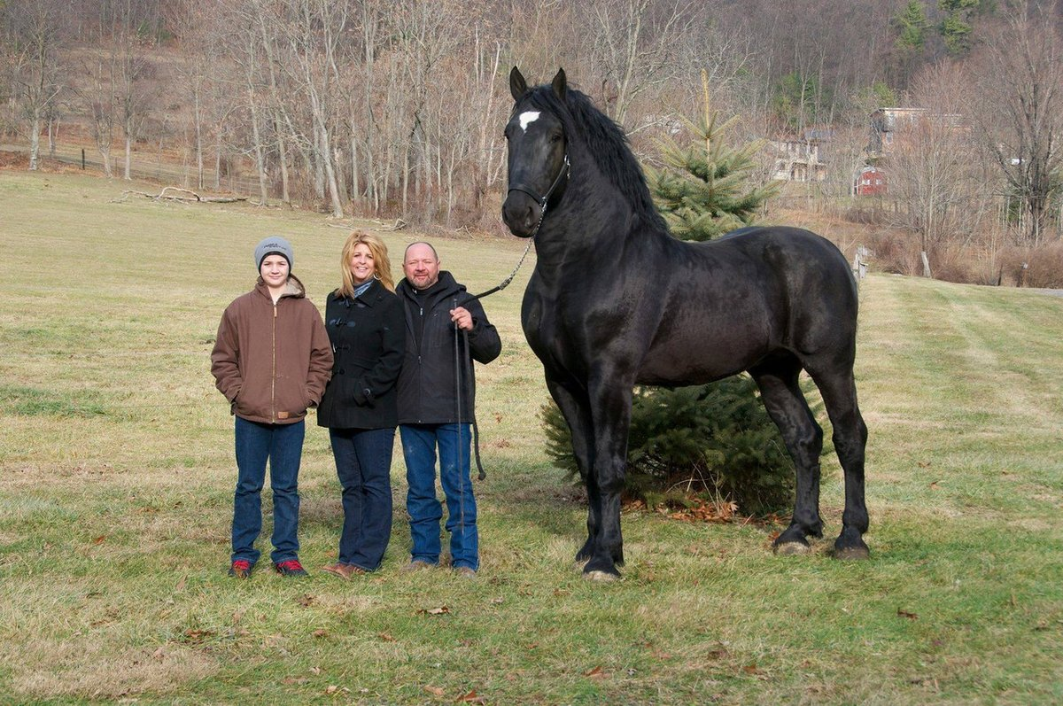 world's largest horse - HD1200×797